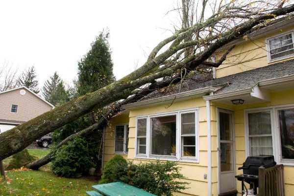 storm tree damage, storm damage restoration, storm board up, storm roof damage