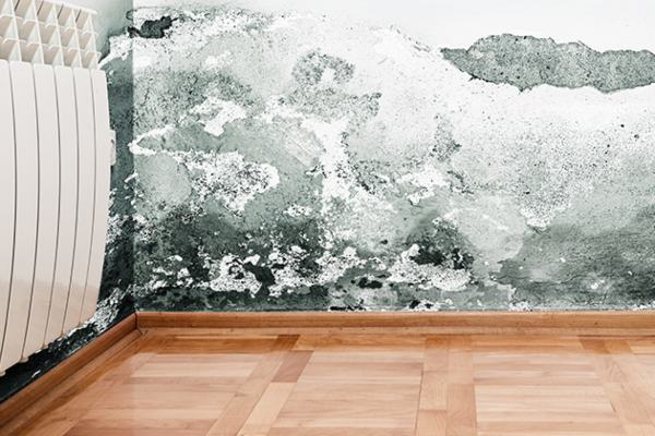 Mold Removal Lafayette